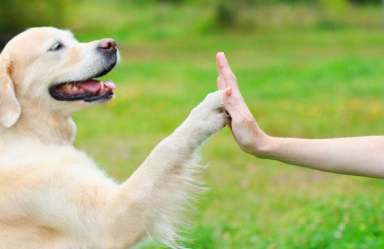 Healing with Furry Friends
